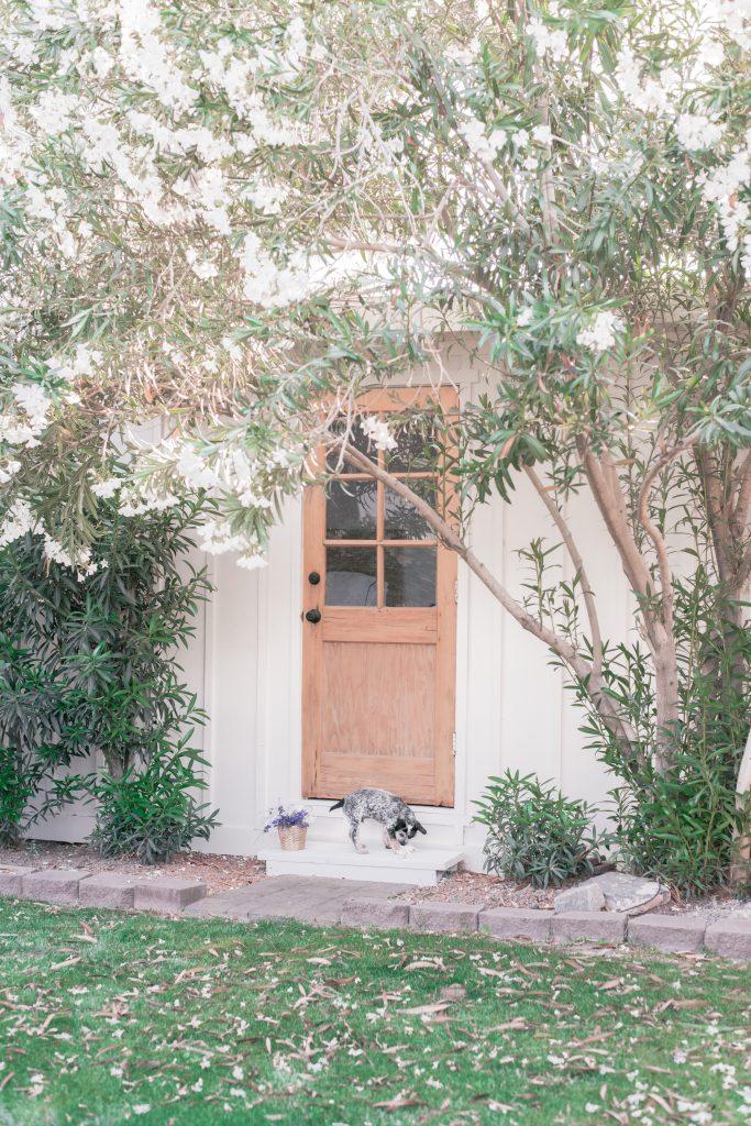 Exterior Wood Door by popular Phoenix lifestyle blog, Love and Spec: image of a exterior wood door.